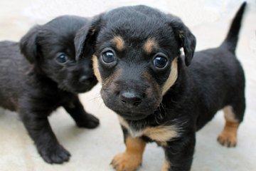 Photo Puppies