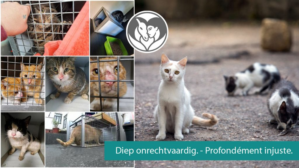 Chats errants - Zwerfkatten